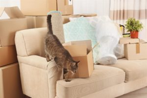 Moving Tips When Moving with Pets